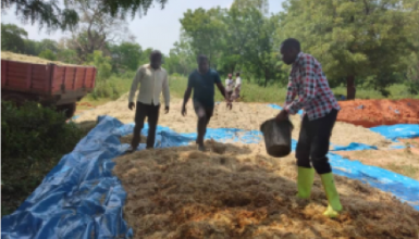 Maize Harvest and Silage Making Training at Maraban Guga Farms, Giwa LGA, Kaduna State.